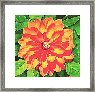 Orange Dahlia Framed Print by Sophia Schmierer