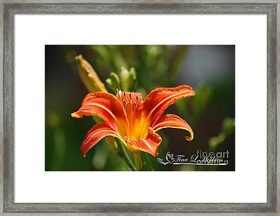Framed Print featuring the photograph Orange Day Lily 20120614_5a by Tina Hopkins