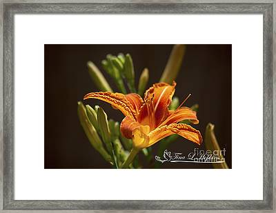 Framed Print featuring the photograph Orange Day Lily 20120615_21a by Tina Hopkins
