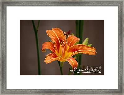 Framed Print featuring the photograph Orange Day Lily 20120620_27a by Tina Hopkins