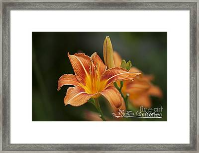 Framed Print featuring the photograph Orange Day Lily 20120624_214a by Tina Hopkins
