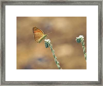 Framed Print featuring the photograph Orange Day by Meir Ezrachi