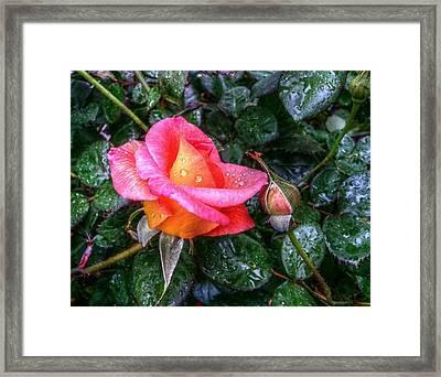 Orange Delight Framed Print by Linda Unger