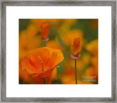 Orange Delight Framed Print by Nick  Boren