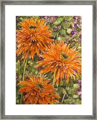 Orange Double Echinacea Framed Print by Karen Olson