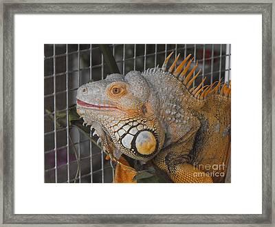 Orange Dragon  Framed Print by Erick Schmidt