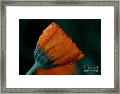 Orange Dream Framed Print by Ruth Jolly