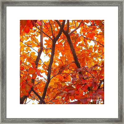 Orange Fall Color Framed Print by Scott Cameron