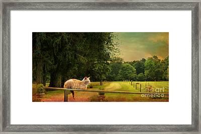 Orange Farm Cat Framed Print