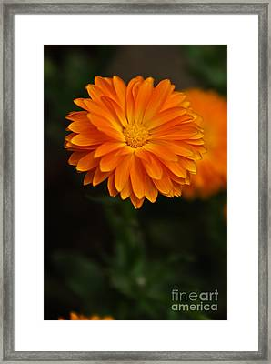 Orange Feathers Framed Print by Syed Aqueel