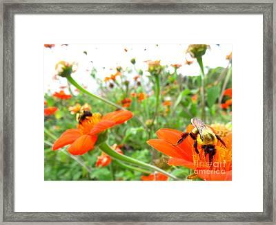 Orange Field Framed Print by Maria Scarfone