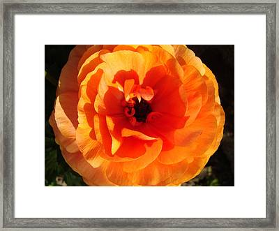 Framed Print featuring the photograph Orange Floral by Tamara Bettencourt