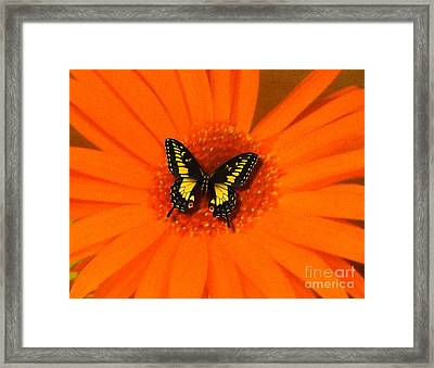 Framed Print featuring the photograph Orange Flower And A Butterfly By Saribelle Rodriguez by Saribelle Rodriguez