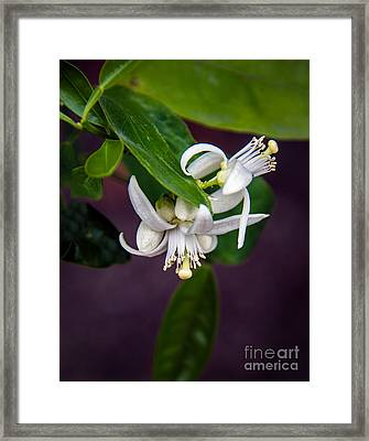 Orange Flower Bloom Framed Print