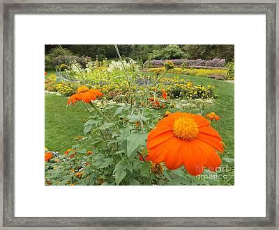 Orange Flower Framed Print by Erick Schmidt