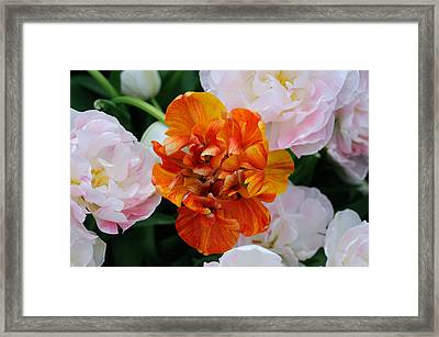 Framed Print featuring the photograph Orange Flower by Haleh Mahbod