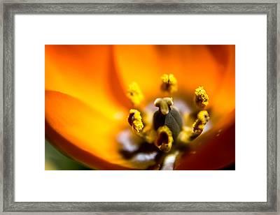 Orange Flower Framed Print by Mari Cody