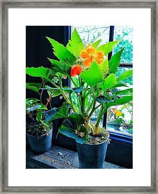 Orange Flower Framed Print