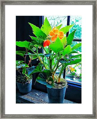 Orange Flower Framed Print by Patricia Greer