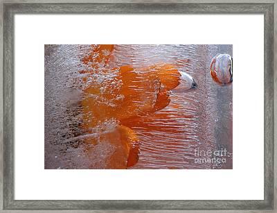 Orange Flower Framed Print by Randi Grace Nilsberg