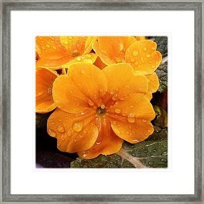 Orange Flower With Water Drops Framed Print