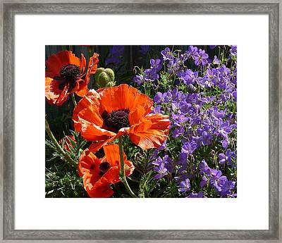 Framed Print featuring the photograph Orange Flowers by Alan Socolik