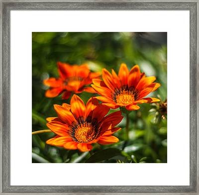 Framed Print featuring the photograph Orange Flowers by Jane Luxton