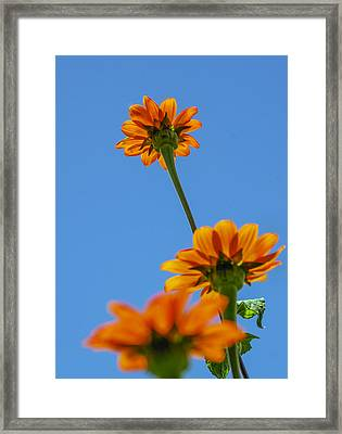 Orange Flowers On Blue Sky Framed Print by Debbie Karnes