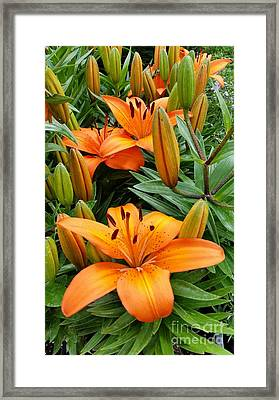 Framed Print featuring the photograph Orange Flowers by Rose Wang