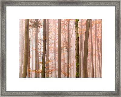 Orange Fog Framed Print