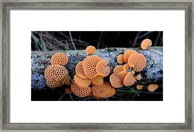 Orange Fungus Framed Print by Pamela Walton