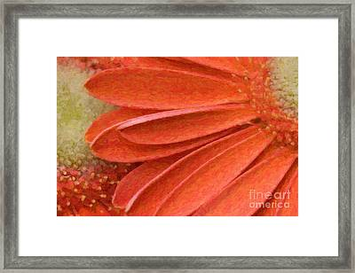 Orange Gerber Daisy Painting Framed Print