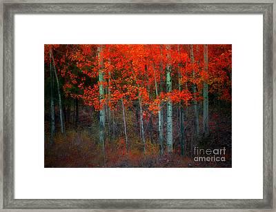 Orange Glory Framed Print by Tara Turner
