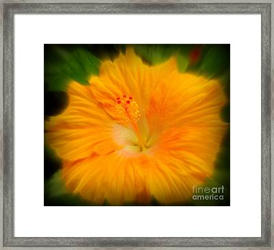 Framed Print featuring the photograph Orange Hibiscus Flower by Clare Bevan
