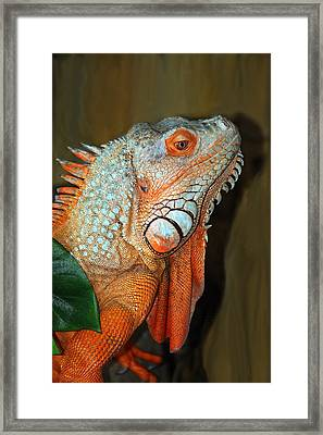 Framed Print featuring the photograph Orange Iguana by Patrick Witz