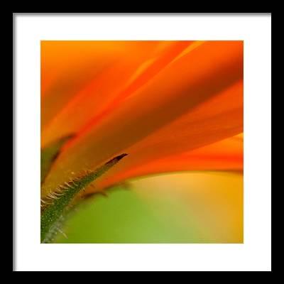 Orange Flower Framed Prints