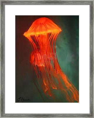 Orange Jellies Framed Print