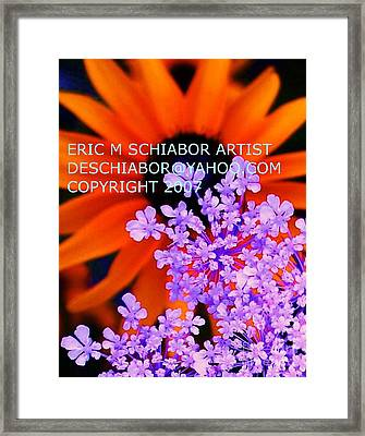 Orange Lavender Flower Framed Print by Eric  Schiabor