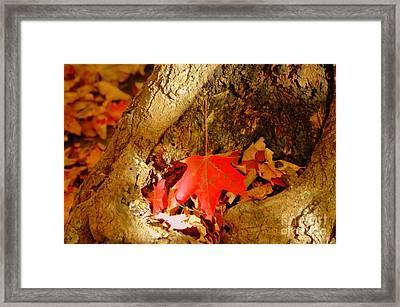 Orange Leaf Framed Print by Kathleen Struckle