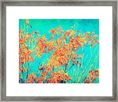 Orange Leaves And Turquoise Sky  Framed Print