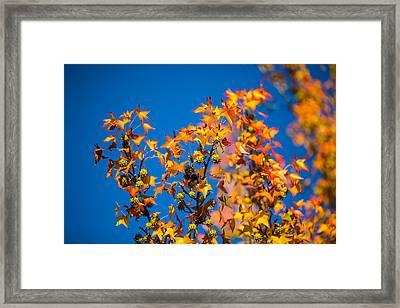 Orange Leaves Framed Print by Mike Lee