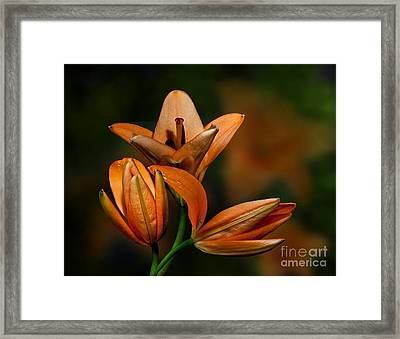 Framed Print featuring the photograph Orange Lilies by Shirley Mangini