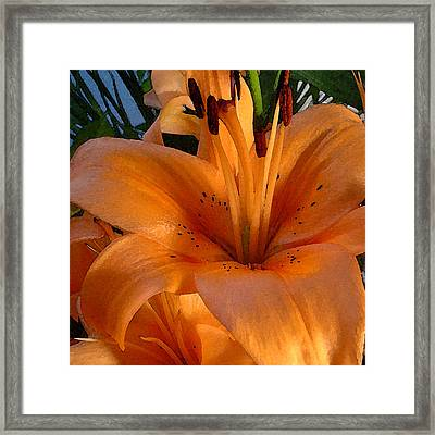 Orange Lily Framed Print by Stephen Prestek