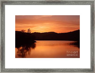 Orange Love Framed Print by Sheldon Blackwell
