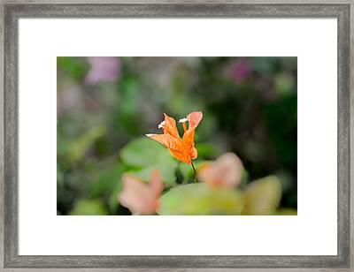 Orange Love Framed Print
