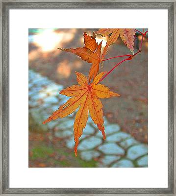 Orange Maple Leaves Framed Print by Lorna Hooper