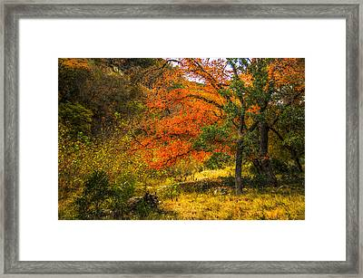 Orange Maples Under A Hill Framed Print