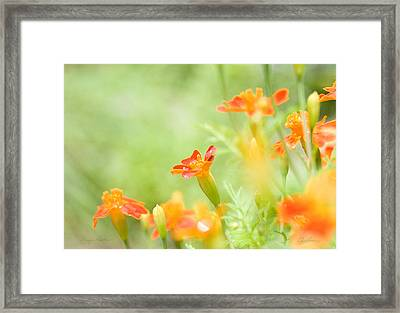 Orange Meadow Framed Print