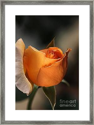 Framed Print featuring the photograph Orange Mood by Joy Watson