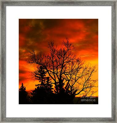 Orange Morning Framed Print by Marjorie Imbeau